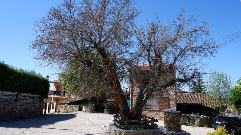 Plaza del Campillo Berzosa de Lozoya - 3